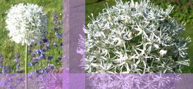 Collage_Blumen_Garten