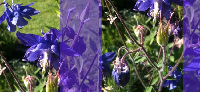 Collage_Blumen_Garten_lila