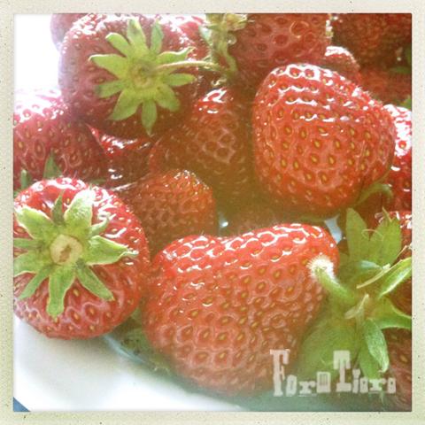 erdbeer liebe sommer