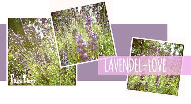 lavendel-love