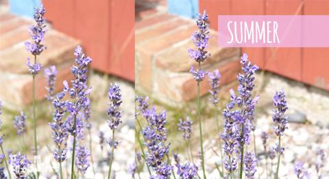 summer_Lavendel-love_formtiere2