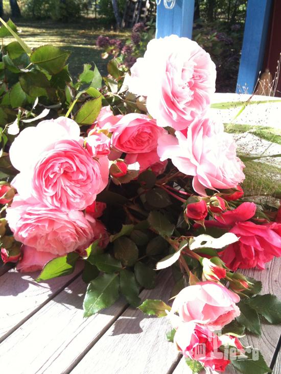 rosen_coffeemorning3_formtiere