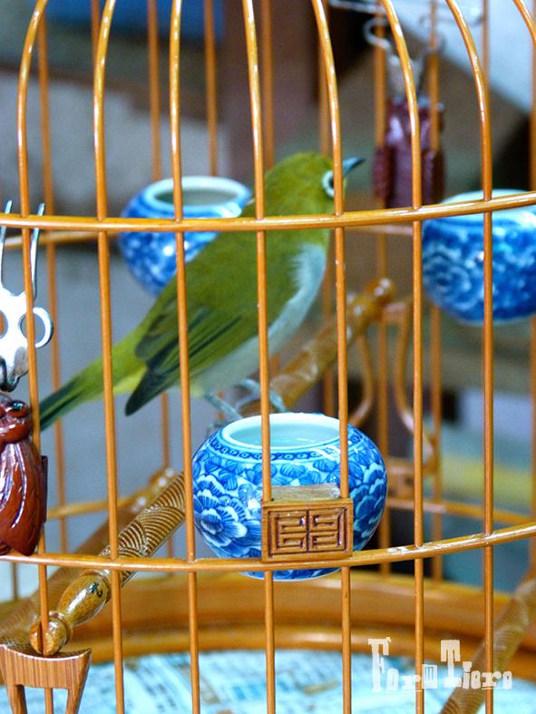 birdmarket1_hongkong_formtiere