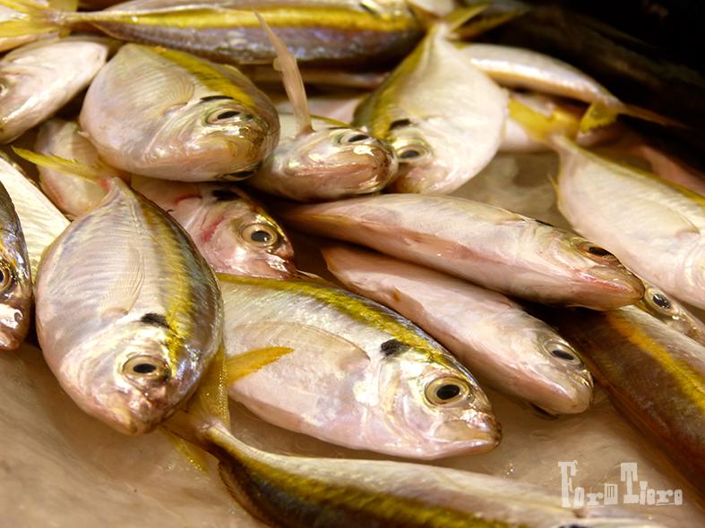 fish2_formtiere